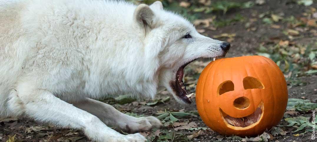 halloween_schoenbrunn