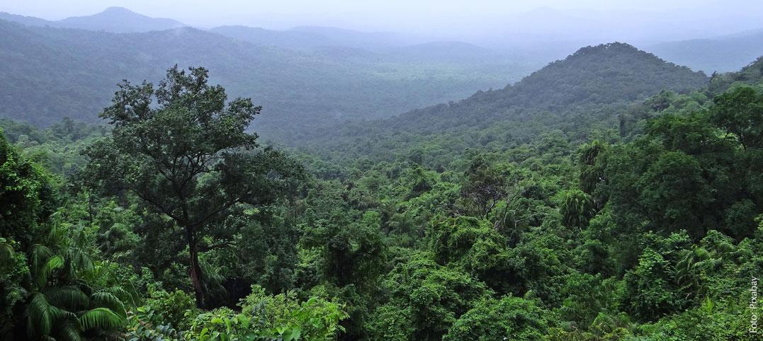 Palmöl zerstört den Regenwald – was Sie dagegen tun können