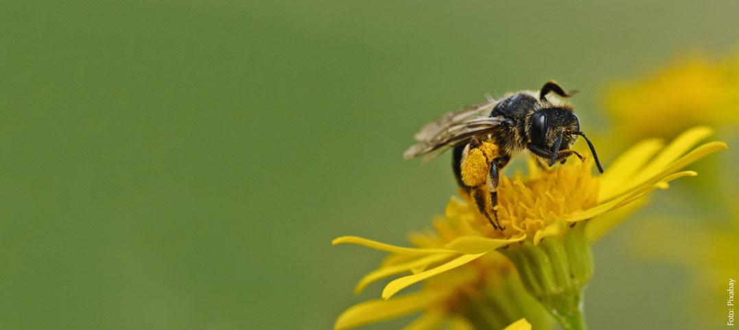 Sicher durch den Sommer: Tipps für Insektengift-Allergiker