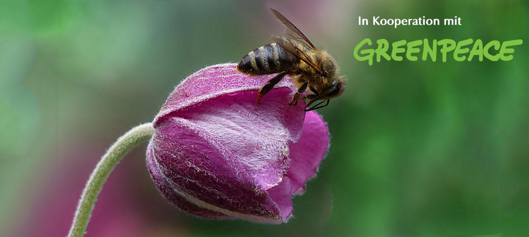 Greenpeace Gewinnspiel: Jetzt mit einer Nisthilfe Wildbienen helfen!