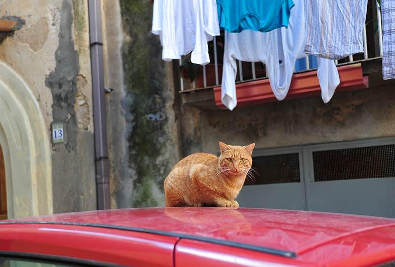 Rote Katze und aufgehängte Wäsche in einem italienischen Hinterhof