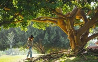 Mädchen spaziert unter einem uralten ausladenden Baum