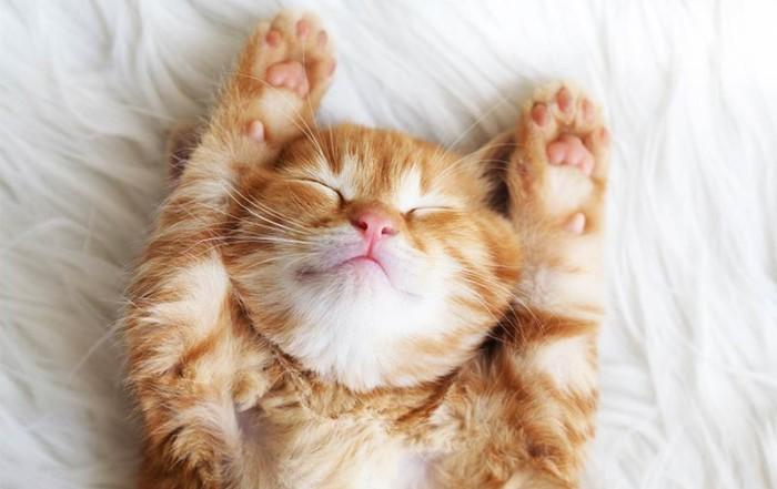 Rotes schlafendes Kätzchen