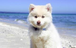 Weißer Hund am Strand
