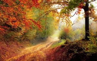 Bunt gefärbter Herbstwald