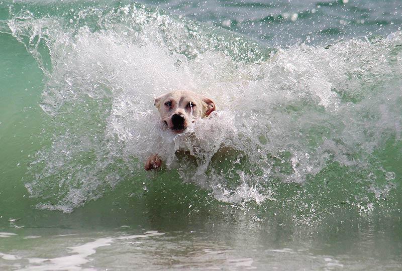 Hund badet im Meer