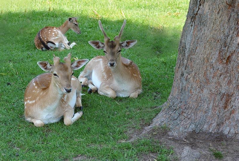 Wildtiere im Lainzer Tiergarten