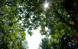 Grüner Wald mit Sonnenstrahl